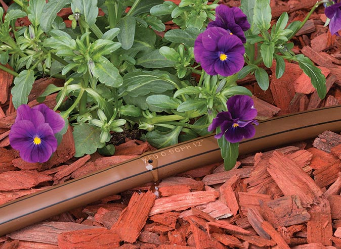 Black Stripe flowers - Recticulation Pipe - Photo by Rainbird
