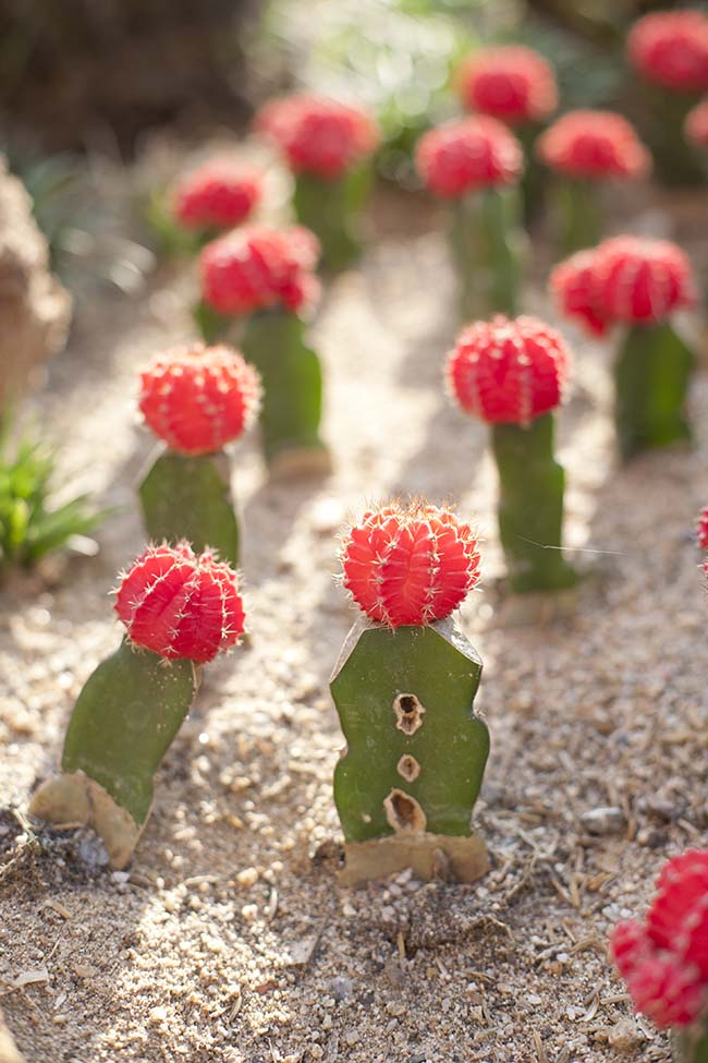 Colourful Cactus garden