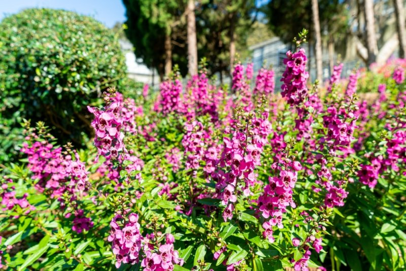 plants for your waterwise garden verge